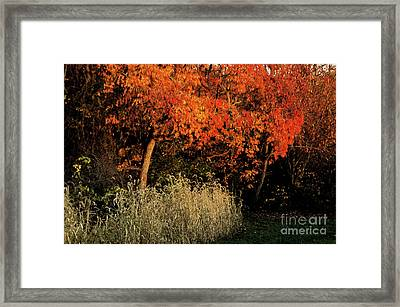Framed Print featuring the photograph Fall Colors 2 by Vilas Malankar