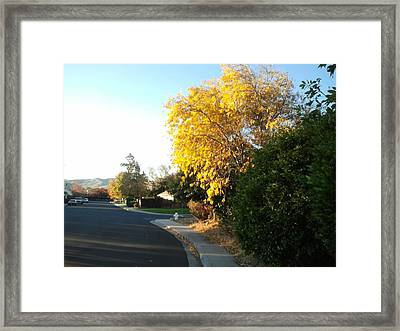Fall Colors 3 Framed Print by Remegio Onia