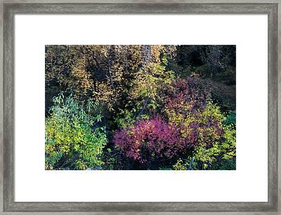 Fall Colors Alaska Framed Print by Gary Rose
