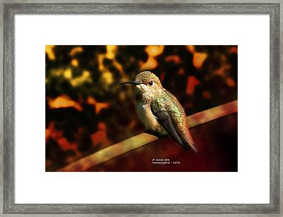 Fall Colors - Allens Hummingbird Framed Print