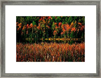 Fall Colors Framed Print by Andre Faubert