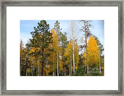 Fall Colors Aspen Framed Print by Pamela Walrath