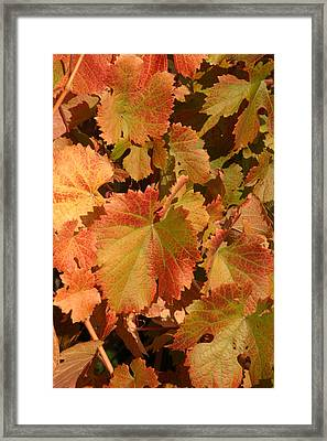 Fall Colors Framed Print by Diane Bohna