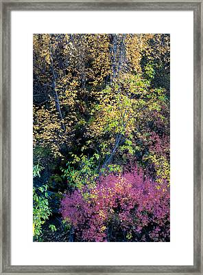 Fall Colors Framed Print by Gary Rose