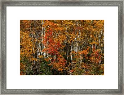 Fall Colors Grand Mesa Framed Print by Ernie Echols
