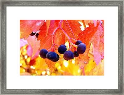 Fall Colors Framed Print by Marilyn Magee