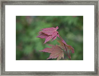 Fall Colors Framed Print by Molly Heng