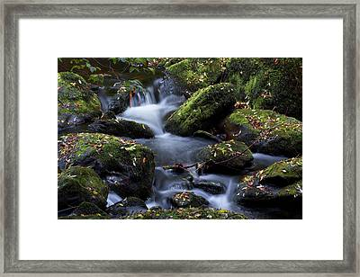 Fall Colors Of The Vartry Framed Print