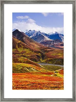 Fall Colours And Alaska Range, Denali Framed Print by Yves Marcoux