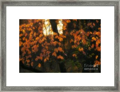 Framed Print featuring the photograph Fall Colours by Art Whitton