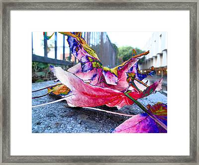 fall composition in spring  at CSULA Framed Print