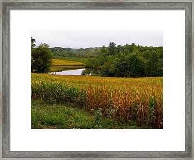 Fall Corn In Virginia Countryside Framed Print by Richard Singleton