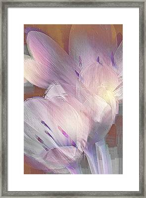 Fall Crocus Framed Print by Jill Balsam