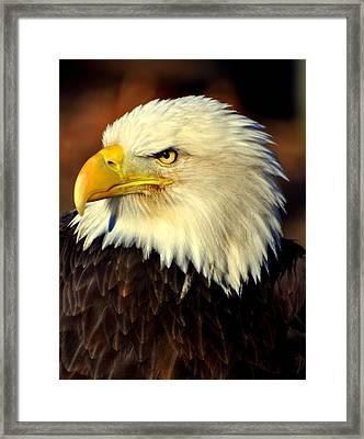 Fall Eagle 5 Framed Print by Marty Koch