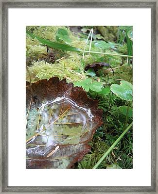 Fall Framed Print by Elizabeth  Ford