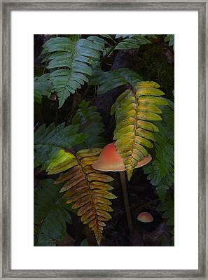 Fall Ferns Framed Print