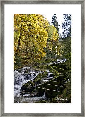 Fall Fish Ladder Framed Print