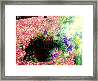 Fall Flowers Framed Print by Amy Bradley