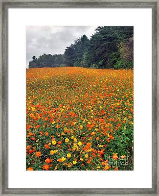 Fall Flowers Framed Print by Janice Spivey