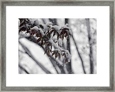 Fall Flurry Framed Print by JAMART Photography