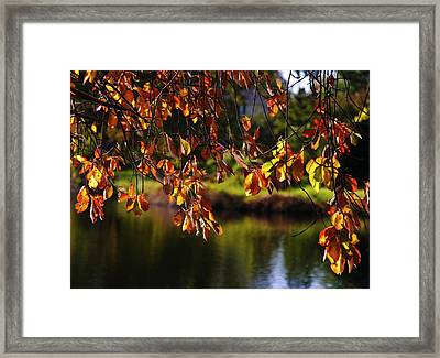 Fall Foliage In Babylon Village Framed Print by Vicki Jauron