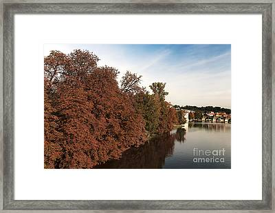 Fall Foliage Framed Print