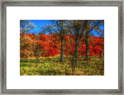 Fall Foliage Framed Print by Ronald T Williams