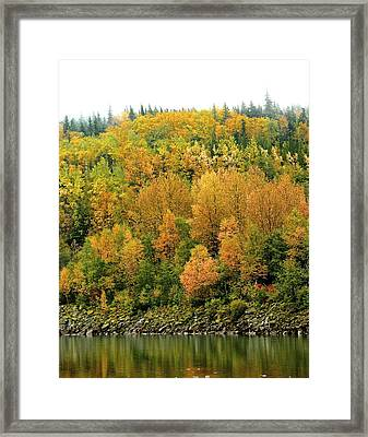Framed Print featuring the photograph Fall Foliage by Sylvia Hart