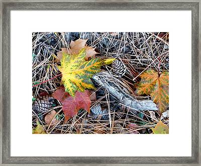 Fall Forest Floor Framed Print