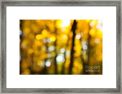 Fall Forest In Sunshine Framed Print