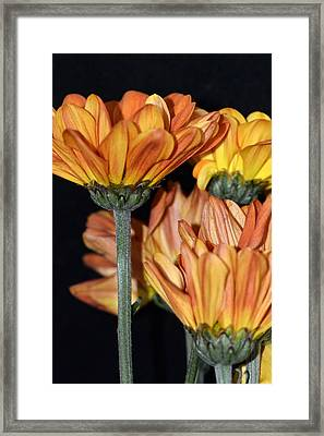 Framed Print featuring the photograph Fall Frenzy by Tanya Tanski