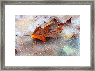 Fall Frost Framed Print by Patrice Zinck