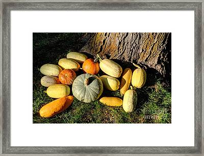 Fall Garden Harvest Sunset Framed Print by Gary Whitton