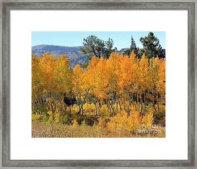 Fall Gathering  Framed Print