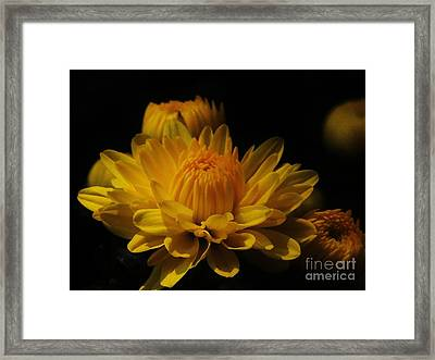 Fall Gold Framed Print by Aubrey Campbell