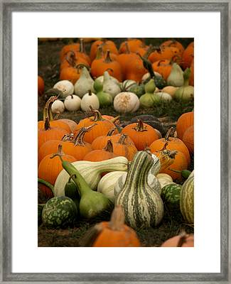 Fall Harvest Framed Print by Brenda Flynn