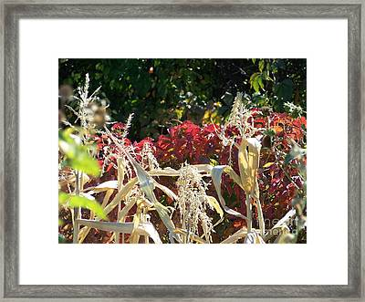 Fall Harvest Of Color Framed Print