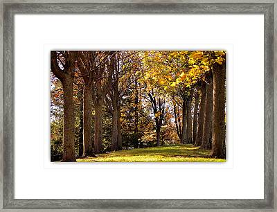 Framed Print featuring the photograph fall in Folsom by Rima Biswas