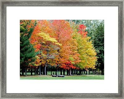Fall In Michigan Framed Print by Optical Playground By MP Ray