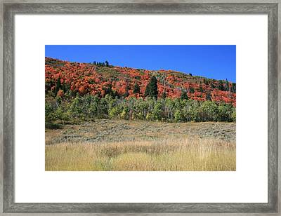 Fall In Park City Framed Print