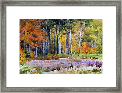 Fall In The Arboretum Framed Print