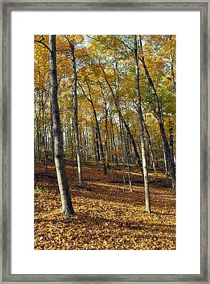 Fall In The Forest 1 Framed Print by Marty Koch