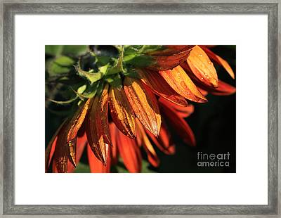 Fall Is On Its Way Framed Print by Marjorie Imbeau