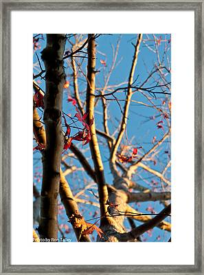 Fall Is On It's Way Framed Print by Ronald Talley