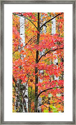 Fall Layers II Framed Print by Adam Pender