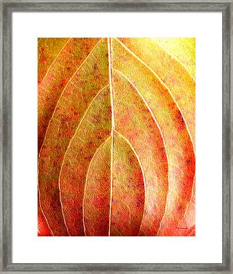 Fall Leaf Upclose Framed Print