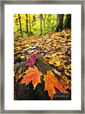 Fall Leaves In Forest Framed Print