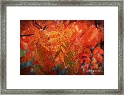 Fall Leaves In Gold Framed Print by Leslie Kinney