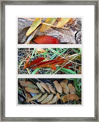 Fall Leaves  Framed Print by K Marie