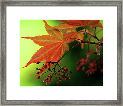 Framed Print featuring the photograph Fall Leaves by Michelle Joseph-Long
